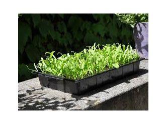 Seed tray 37,5 x 23 x 6 cm - set a 12