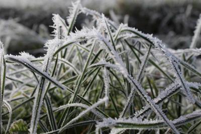 Hoe onderhoud ik mijn tuin in de winter?